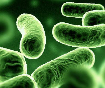 O que são bactérias?