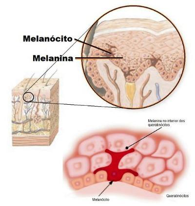 O que é Melanina?