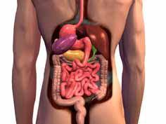 O que é Aparelho Digestivo?