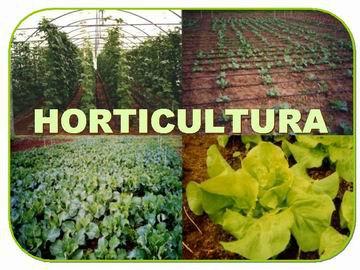 O que é Horticultura?