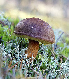 O que são Cogumelos?