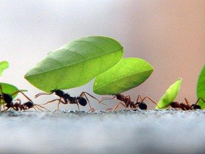O que são Formigas?
