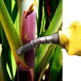 O que é etanol?