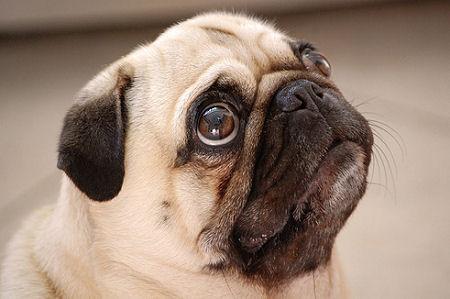 O que é Pug?