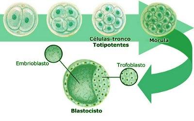 O que são células tronco?