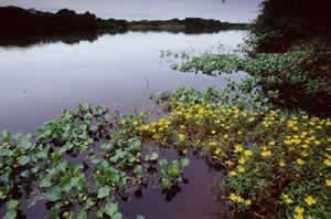 O que é Pantanal?