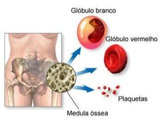 O que é medula óssea?