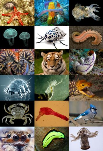 O que é zoologia?