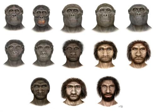 O que é hominídeos?